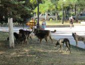 Крымчанин умер после нападения стаи бродячих собак