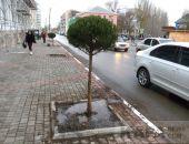 Вдоль чулочной фабрики высадили деревья:фоторепортаж