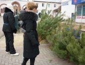 Сколько в этом году будут стоить новогодние ели и сосны в Крыму?