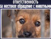 За жестокое обращение с животными будут наказывать вплоть до лишения свободы на 5 лет