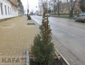 Возле феодосийской чулочной фабрики высадили новые деревья:фоторепортаж