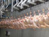 Крым планирует увеличить экспорт мяса птицы в Казахстан до 500 тонн