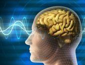 Учёные нашли в человеческом мозге сеть наподобие Wi-Fi
