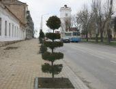 В Феодосии у чулочной фабрики опять высадили новые саженцы:фоторепортаж