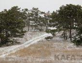 «Зимы ждала, ждала природа. Снег выпал только в январе»:фоторепортаж
