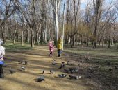 Феодосия. Комсомольский парк зимой
