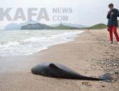 В Крыму учёные Карадагской научной станции исследуют, почему дельфины выбрасываются на берег