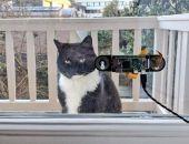 Голландец придумал систему распознавания морды кота, чтобы открывать дверь