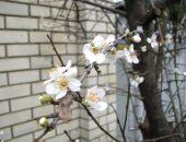 В Крыму наконец потеплеет, но март на полуострове будет необычно прохладным