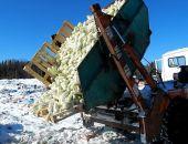 Под Тверью раздавили 38 тонн польских яблок и капусты