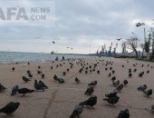 Феодосийская набережная в начале весны (видео)