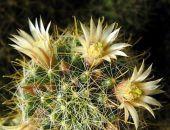 В Никитском ботаническом саду цветут ирисы, нарциссы и экзотические кактусы