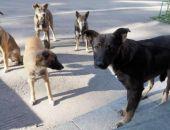 В Подмосковье бродячие собаки загрызли мужчину и искалечили девушку