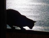 Мартовский кот: первый полуфинал