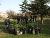 В парках и скверах столицы Крыма до конца марта высадят более ста деревьев