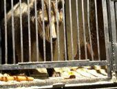 Найденные на автостоянке в Самаре три медведя будут жить в Крыму в парке львов «Тайган»