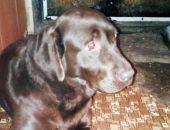 Внимание! В Феодосии ищут хозяина собаки
