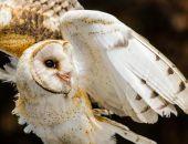 В Судаке продолжат суд на фотографом, который предлагал съемки с редкой совой