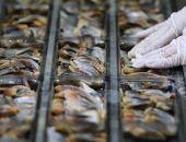 «Росконтроль» проверил сельдь в магазинах и нашел там больше плесени, чем рыбы
