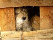 В Крыму начали штрафовать владельцев незарегистрированных собак