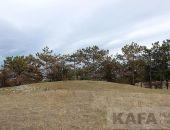 Власти Феодосии обратили внимание на сухой лес на Тепе-Оба