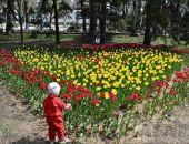 В Феодосии на высадку цветов потратят 2,7 млн. рублей