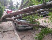 В Севастополе дерево упало на две иномарки