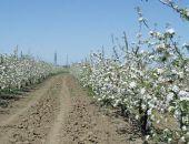 На закладку новых садов в Крыму аграриям выделят 850 млн. рублей из бюджета