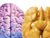 Какие продукты особенно полезны для мозга?