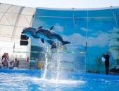 Дельфинарий «Немо» проведет бесплатное представление для детей