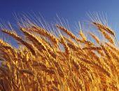 Россия направит излишки прошлогоднего урожая зерна в нуждающиеся страны