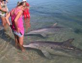В Крыму может появиться биосферный питомник для черноморских дельфинов