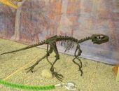 Останки первого крымского динозавра впервые покажут публике