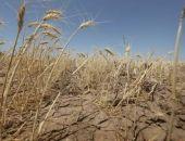 Несколько регионов Крыма готовы объявить режим ЧС из-за засухи