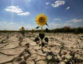 Крым попросит Москву компенсировать аграриям потери из-за засухи
