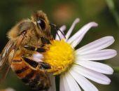 Власти Германии обеспокоились критическим сокращением насекомых в стране