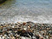 На крымских пляжах туристы купаются в мазуте (фото)