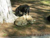 В Феодосии скоро начнут отлов бродячих собак