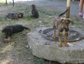 В Феодосии во двор жилого дома выбросили 12 щенков:фоторепортаж