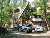 Горожане возмущены спилом деревьев на ул. Назукина:фоторепортаж
