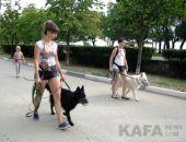 День города в Феодосии открыл парад собак (видео):фоторепортаж