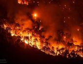 Площадь пожара в лесу под Ялтой выросла в 10 раз, к тушению привлекли авиацию