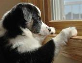 Три причины завести собаку для поддержания здоровья