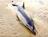 На побережье Крыма выбросило мёртвых дельфинов и осетров