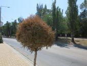 Деревья у чулочной фабрики засыхают