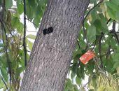 В столице Крыма начали нумеровать деревья (фото)
