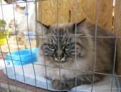 В Феодосии проходит выставка кошек