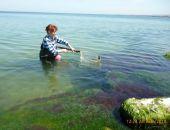 Введён запрет на ловлю черноморских креветок у побережья Крыма