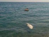 В Крыму к побережью ялтинского пляжа прибило мёртвого крокодила (фото)