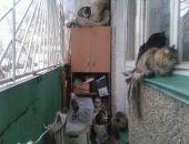 В столице Крыма запретили держать животных на балконах и выгуливать их в нетрезвом виде